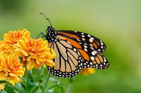 The Butterfly Effect, Pacifiers, and Interconnectedness