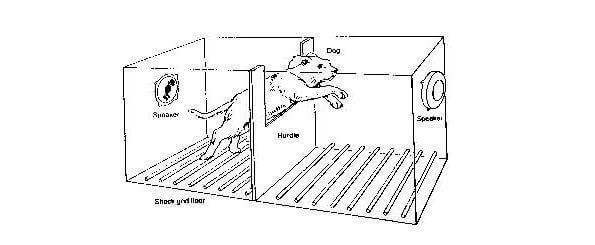 Martin Seligman Dog Experiment